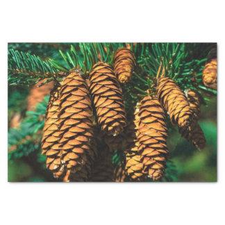 Spruce Tree Cones Tissue Paper