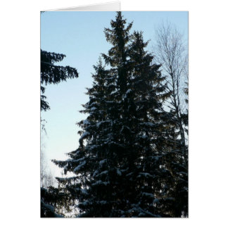 Spruce Trees In Forest Card