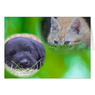 Spying Cat & Sleeping Pup Card