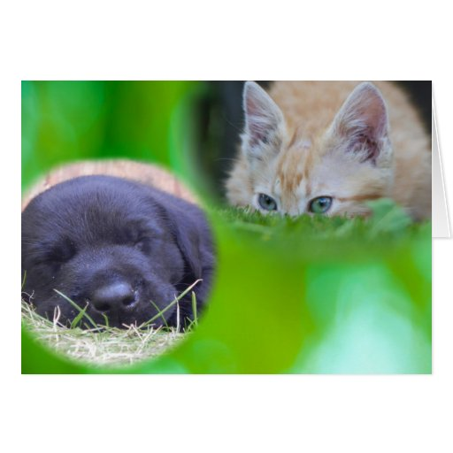 Spying Cat & Sleeping Pup Card