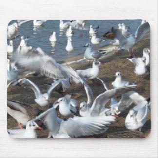 squabbling seagulls mouse pad