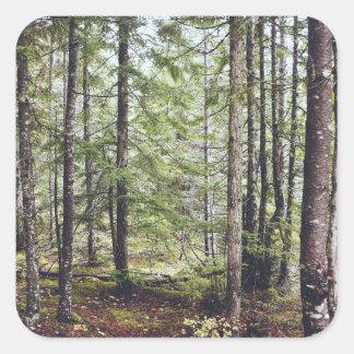 Squamish Forest Floor Square Sticker