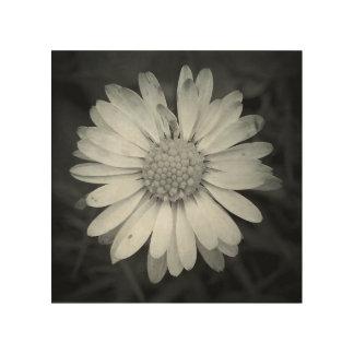 Square Daisy Wood Print