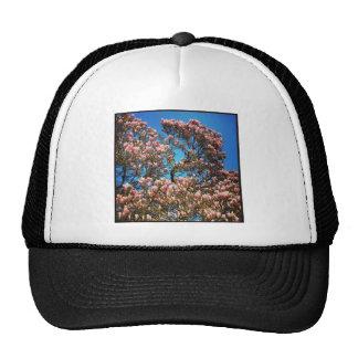 Square photo - Magnolia Blossom Cap
