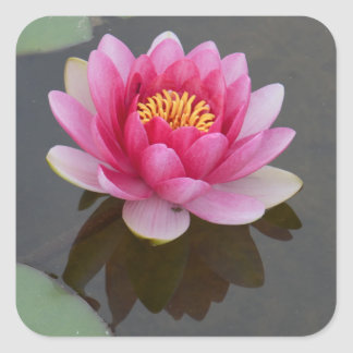 Square Sticker with Water Lily Design