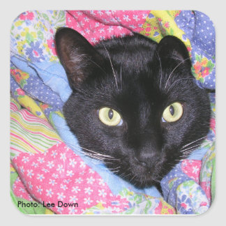 Square Stickers: Funny Cat wrapped in Blankets Square Sticker