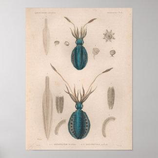 Squid Blue Vintage Sea Creatures Art Print