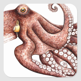 Squid - Octopus vulgaris Square Sticker