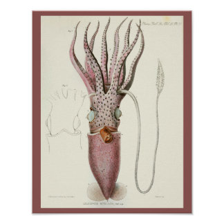 Squid Purple Cephalopod Sea Creatures Art Print
