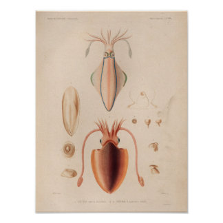 Squid Red Vintage Sea Creatures Art Print