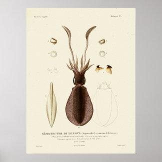 Squid Vintage Cephalopod Sea Creatures Art Print