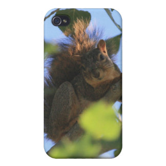 Squirrel 2 4/4s iPhone 4/4S covers