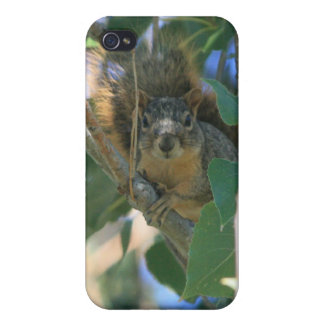 Squirrel 3 4/4s covers for iPhone 4