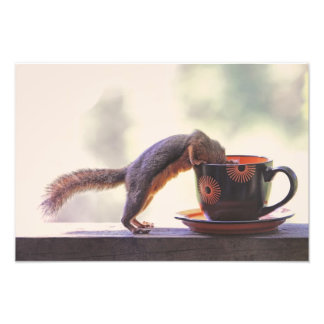 Squirrel and Coffee Cup Photo
