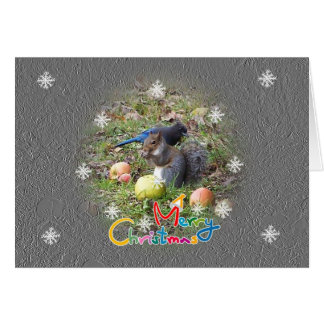 Squirrel And Steller Jay Friend Christmas Card