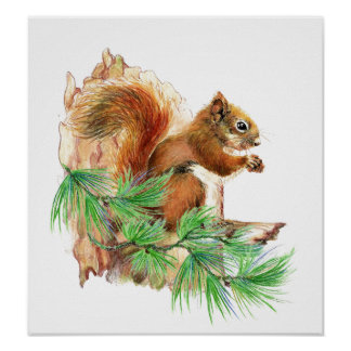 Squirrel Animal Wildlife  Poster