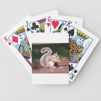 squirrel bicycle playing cards