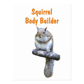 Squirrel Body Builder Postcard