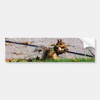 Squirrel By The Road Bumper Sticker