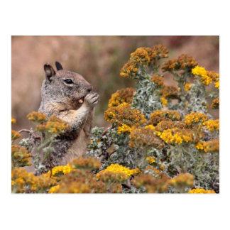 Squirrel & Chipmunk Postcard