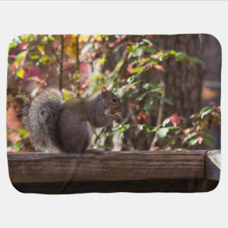 Squirrel Chow Time Baby Blanket