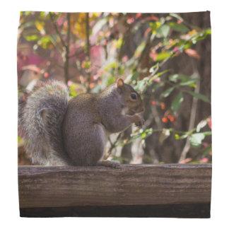 Squirrel Chow Time Bandana