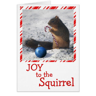 Squirrel Christmas ornament greeting card