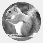 Squirrel Classic Round Sticker