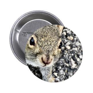 Squirrel Close Up! 6 Cm Round Badge