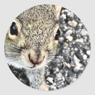 Squirrel Close Up! Classic Round Sticker