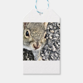 Squirrel Close Up! Gift Tags