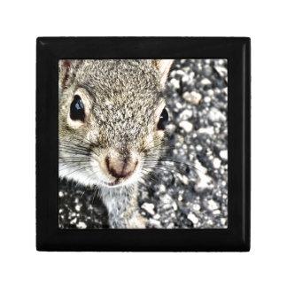 Squirrel Close Up! Small Square Gift Box