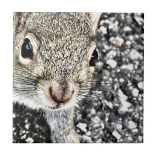 Squirrel Close Up! Tile