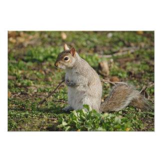 Squirrel Cradling Nuts Photo Art
