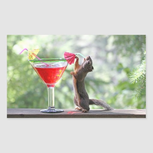 Squirrel Drinking Tropical Drink Rectangle Stickers