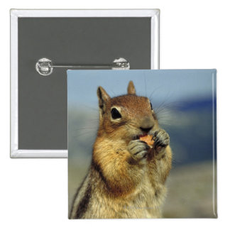 Squirrel eating 15 cm square badge
