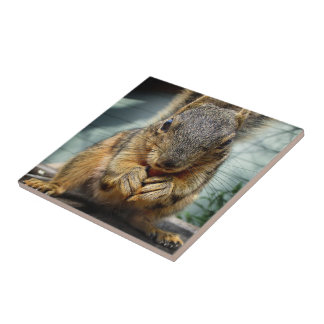 Squirrel Eating 1 Tile
