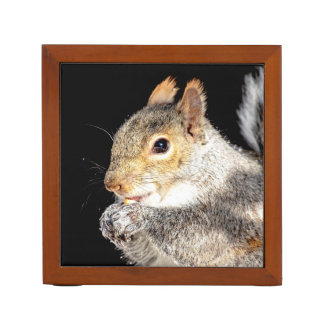 Squirrel eating a nut desk organiser
