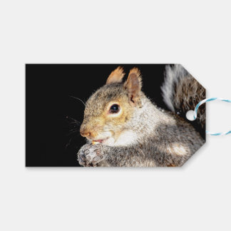 Squirrel eating a nut gift tags