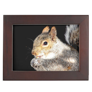 Squirrel eating a nut keepsake box