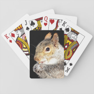 Squirrel eating a nut playing cards