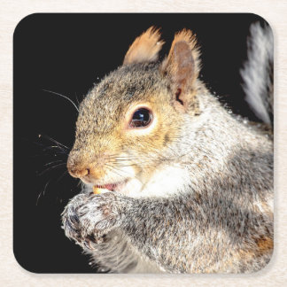 Squirrel eating a nut square paper coaster