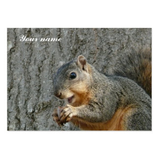 squirrel eating business cards