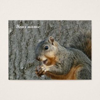squirrel eating business card