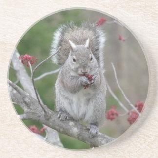 Squirrel eating coaster
