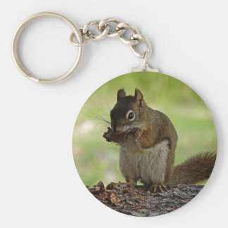 Squirrel eating Cone Key Ring