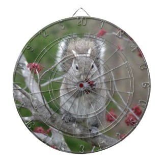 Squirrel eating dartboard