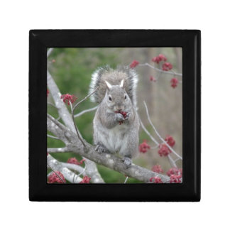 Squirrel eating gift box