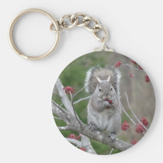 Squirrel eating key ring