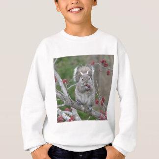 Squirrel eating sweatshirt